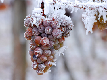ice-grapes2