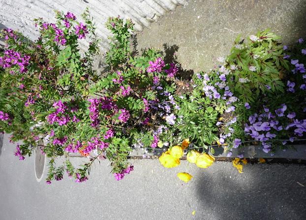 Montreux-flowers1