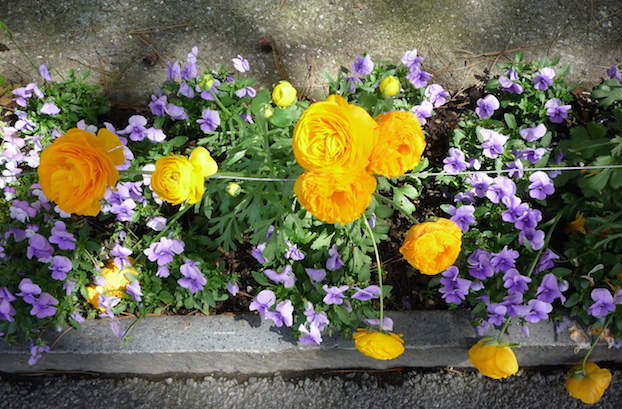 Цветники в Монтре (1)