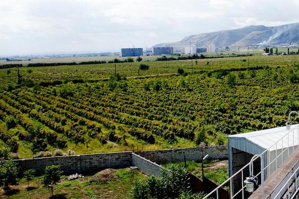 Derbent-vineyards
