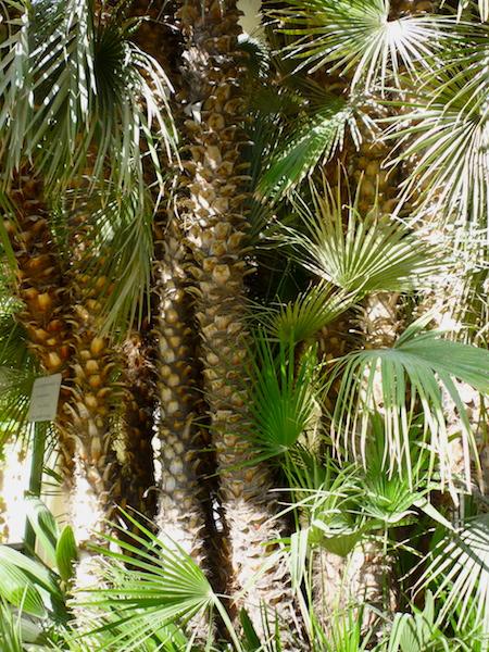 Palma Gete2