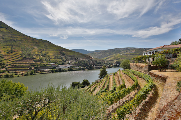 Douro_vineyards1