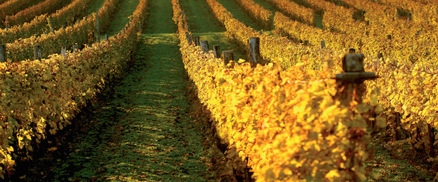 Royal_Tokaji_vineyards