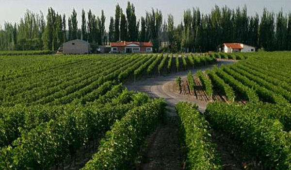finca-la-linda_vineyard