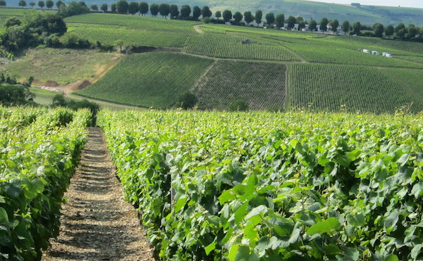 Sancerre-vineyards