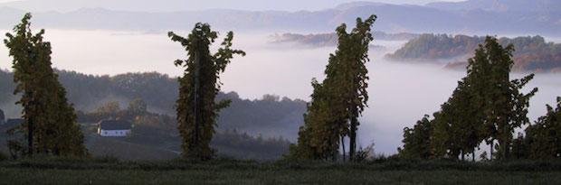 Виноградники Tement (1)