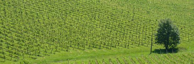 Виноградники Tement (2)