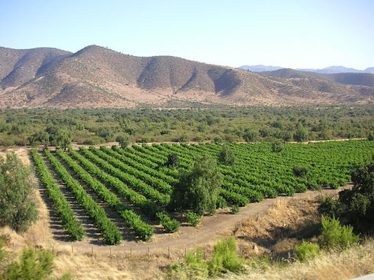 Chilean_vineyard_in_Andes