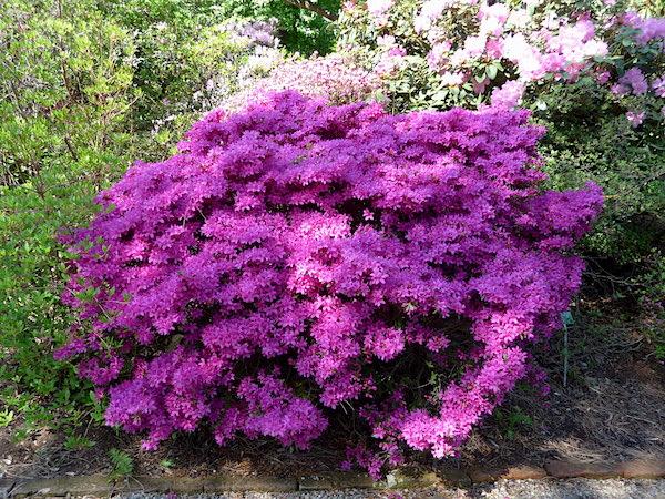 Цветы в ботаническом саду в Вене