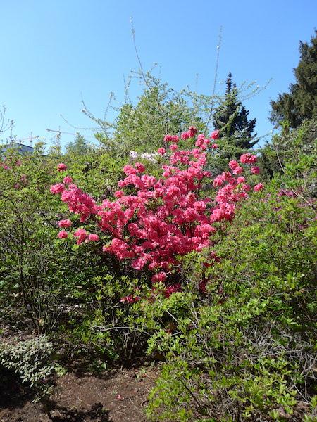 Цветы в венском ботсаду