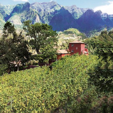Justino-vineyard