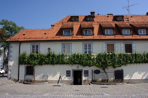 Oldest-Vine-Maribor