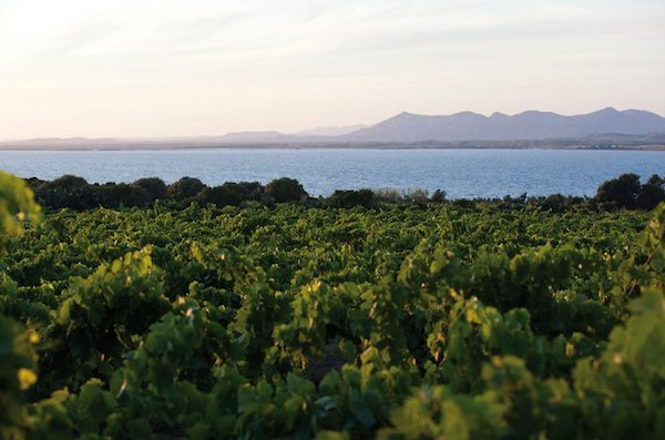 Argiolas - виноградники