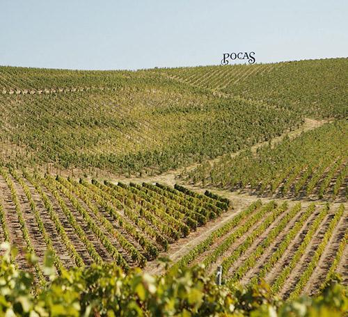 Pocas - vineyard