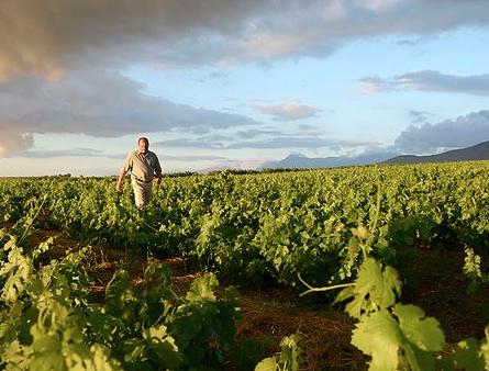 Один из виноградников Douglas Green (DGB)