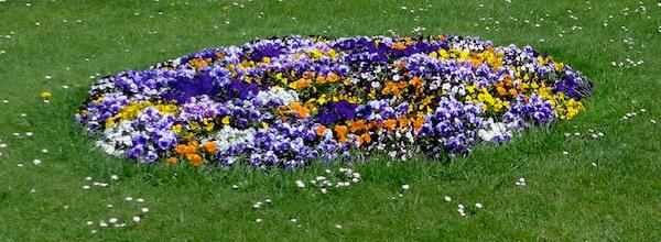 Цветник в садах Шенбрунна