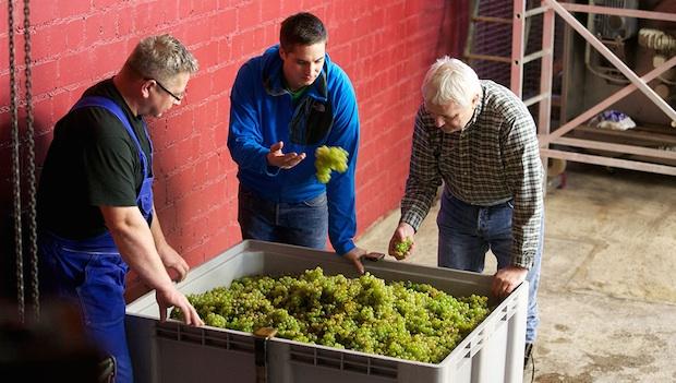 Оценка винограда - хозяйство Strub