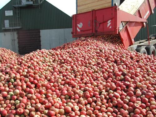 Stassen - harvesting