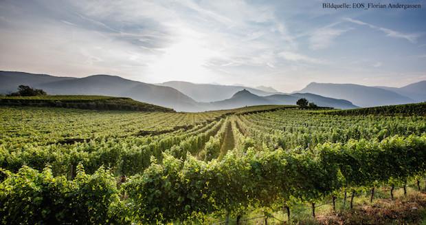 Erste Neue vineyards