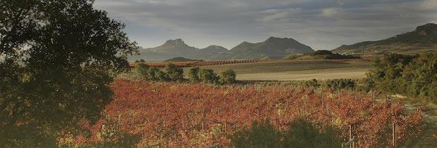 виноградники Риоха