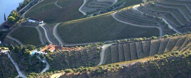 виноградники в Дору