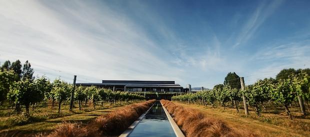 совиньон блан мальборо виноградник