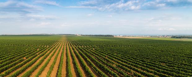 Виноградник Фанагория