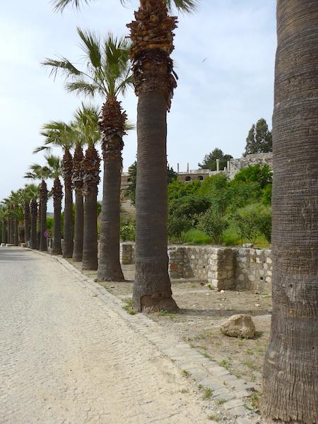 Пальмы в Сельчуке