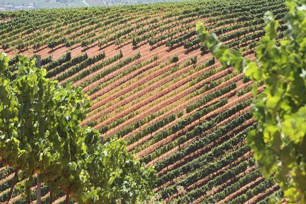 виноградники в Бьерсо