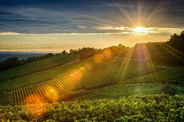 Gavi виноградники