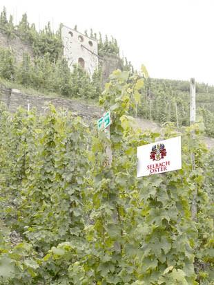 виноградники Selbach-Oster