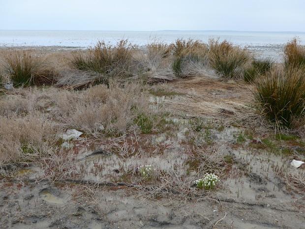 растительность соленое озеро