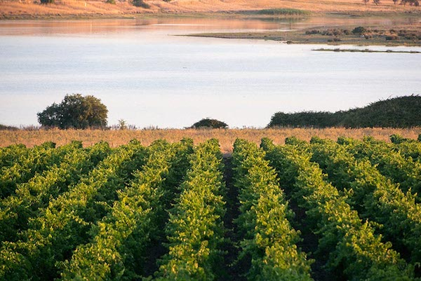 виноградники Planeta Сицилия