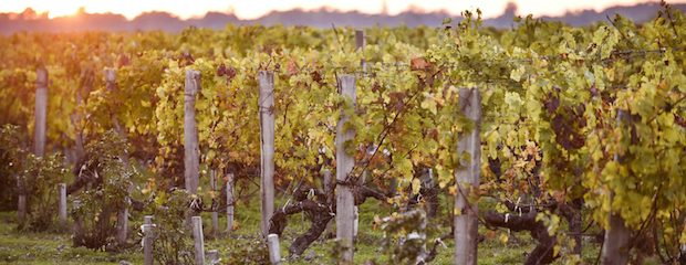 апелласьон Listrac-Medoc - виноградники
