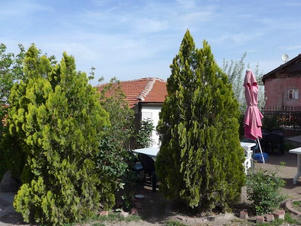 Анкара - деревья