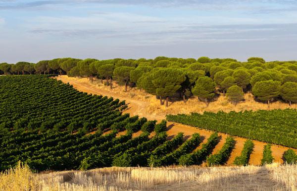 виноградники Palacio de Bornos