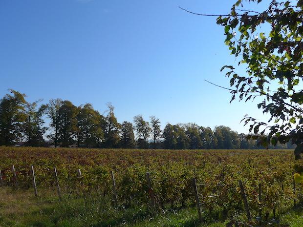 Северная Италия виноградники