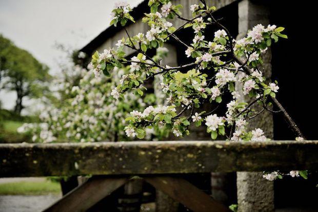 яблоневый сад Англия