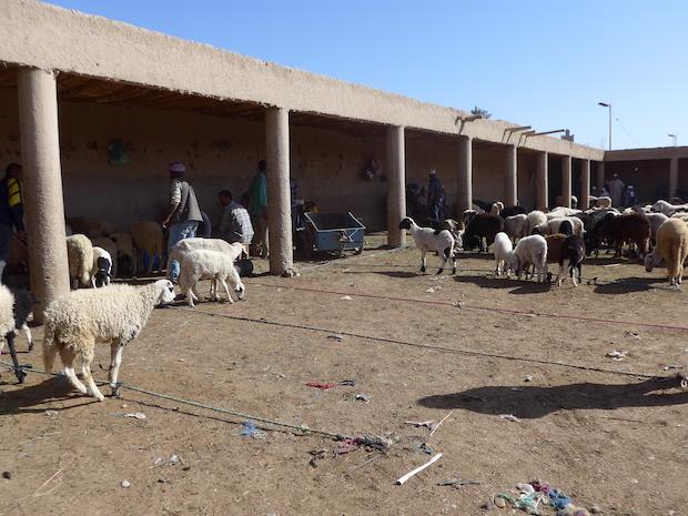 Риссани рынок домашних животных