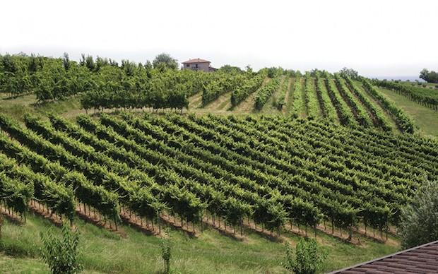 виноградник Breganze DOC