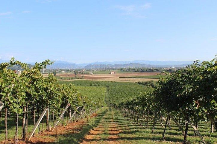 Венето виноградники