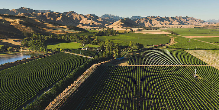 Виноградник Lake Chalice